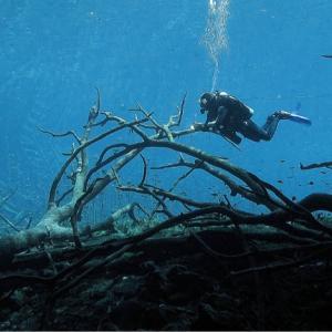 queloniandivers-divers-caves.jpg