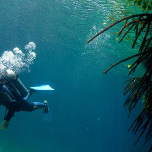 cenotes-diving.jpeg