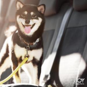 o-clients-cancun-joy-transfers-pet-friendly.jpeg