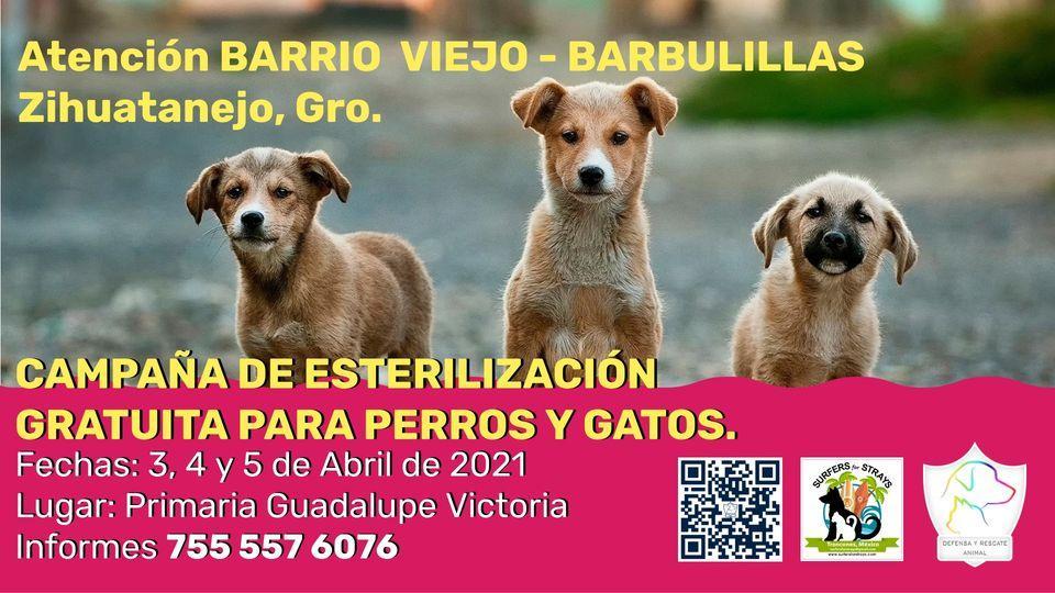 Campaña de Esterilización Gratuita para Perros y Gatos